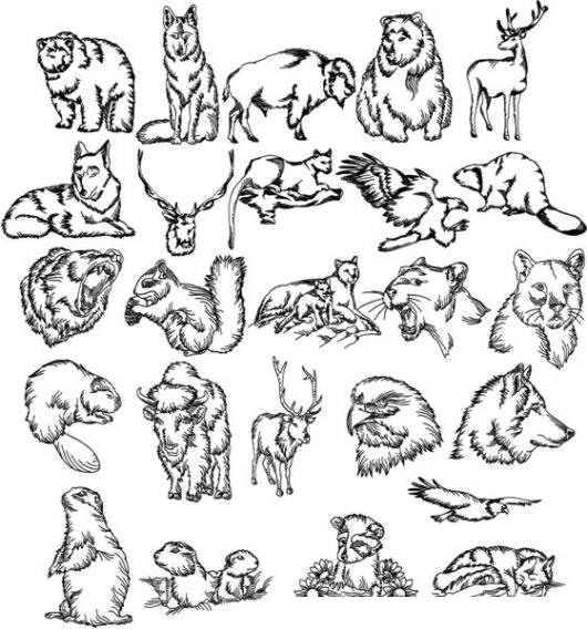 Animalessalvajes Dibujo De Animales Salvajes Para Imprimir