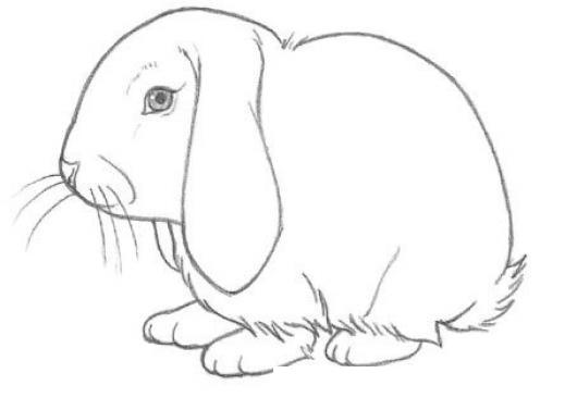 Dibujo De Conejo Triste Con Las Orejas Caidas Para Pintar Y