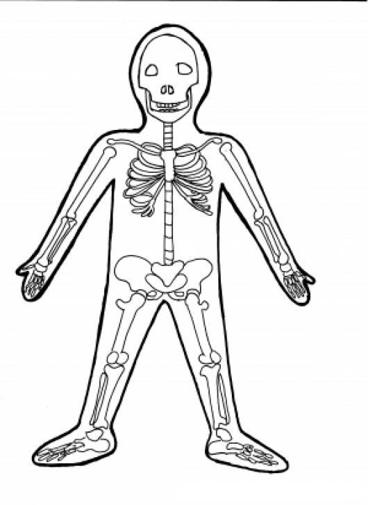 Dibujo De Los Huesos Del Cuerpo Humano Para Pintar Y Colorear