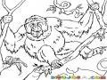 Dibujo De Orangutan En Un Arbol Para Pintar Y Colorear