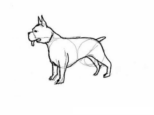 Como Dibujar Un Perro Pitbull Para Pintar Y Colorear   COLOREAR ...