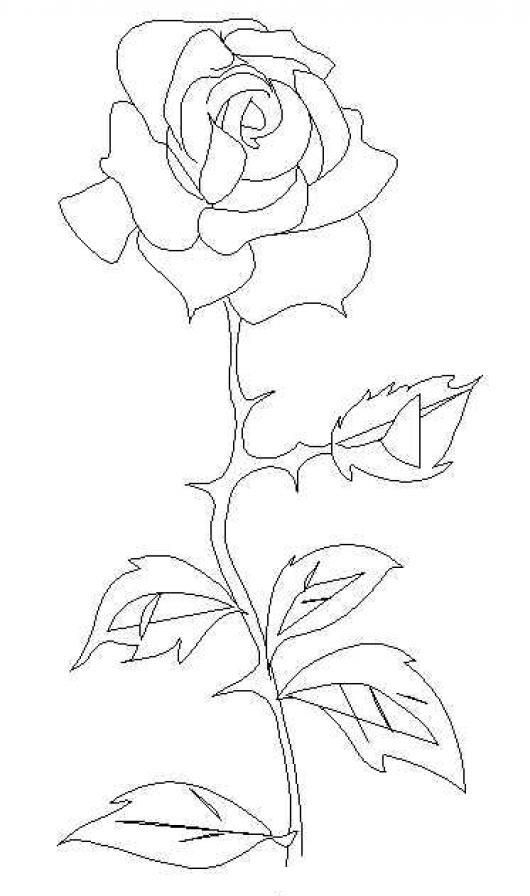 Colorear Rosa Con Espinas Colorear Dibujos De Rosas Dibujo D