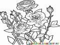 Colorear Rosal de Rosas