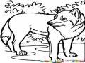 Dibujo De Lobo Para Pintar Y Colorear
