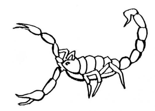 Dibujo De Alacran Para Pintar Y Colorear Un Escorpion Venenoso