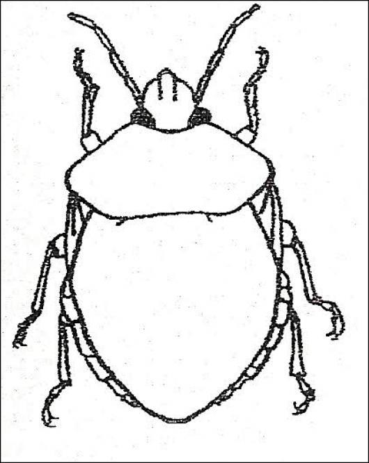 Ronron Dibujo De Escarabajo Ron Ron Para Pintar Y Colorear ...