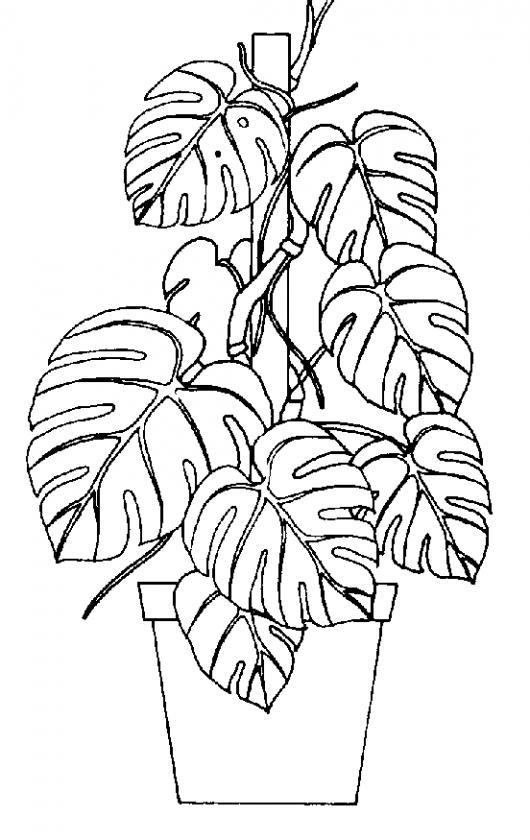 Dibujo De Planta En Una Maseta Para Pintar Y Colorear | COLOREAR ...