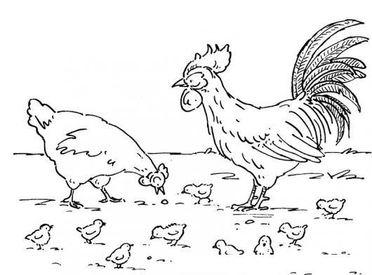 Gallo Gallina Y Pollitos Para Colorear Colorear Dibujos Varios