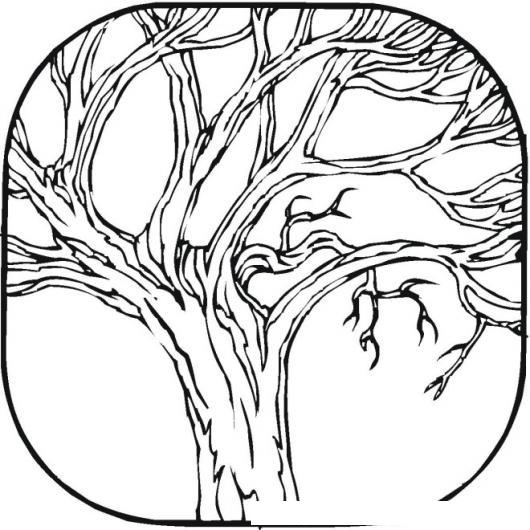 Colorear Arbol sin hojas | COLOREAR DIBUJOS DE CHOLO | Dibujo de un ...