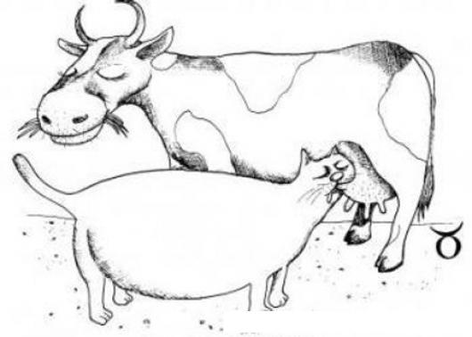 Dibujo De Gato Gordo Mamando Leche De Una Vaca Para Pintar Y
