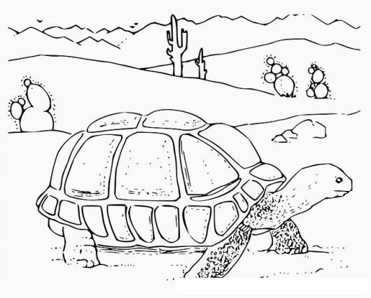 Tortuga Del Desierto Dibujo De Tortuga Caminando En El Desierto