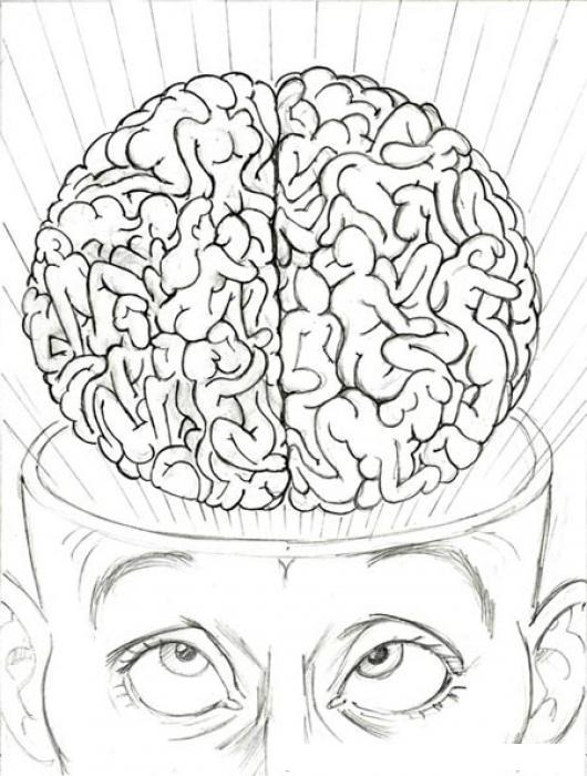 Cerebro Sexual Dibujo Del Cerebro De Ninfomania Para Pintar