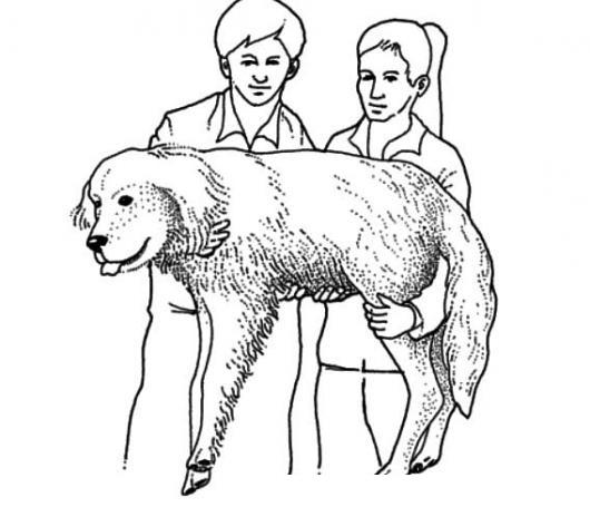 Pareja De Veterinarios Cargando A Un Perro Para Pintar Y Colorear A ...
