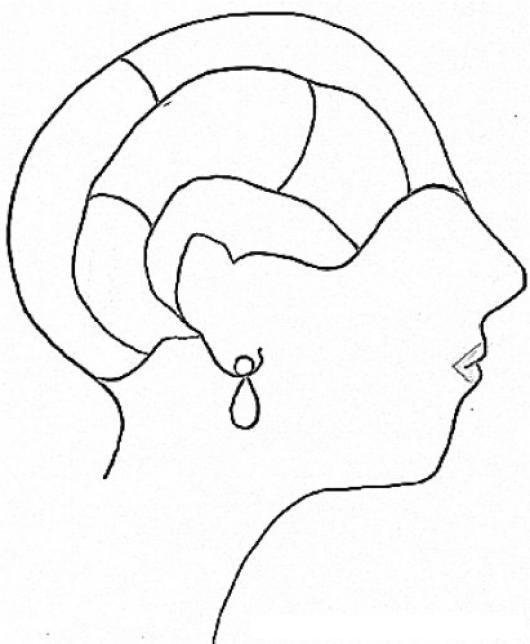 Cerebro De Mujer Para Pintar Y Colorear El Cerebro De Una