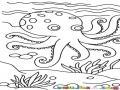 Dibujo De Pulpo En El Mar Para Pintar Y Colorear