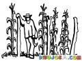 Milpero Dibujo De Un Campesino Tapiscando Su Milpta Para Pintar Y Colorear Plantas De Elotes