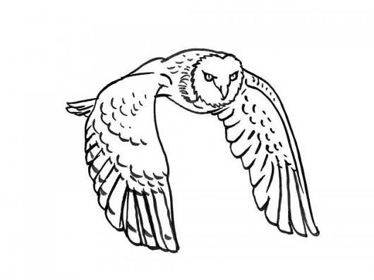 Colorear Buho Volando Owl Flying  COLOREAR DIBUJOS DE CHOLO