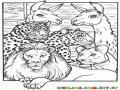 Colorear Leon En El Arca De Noe