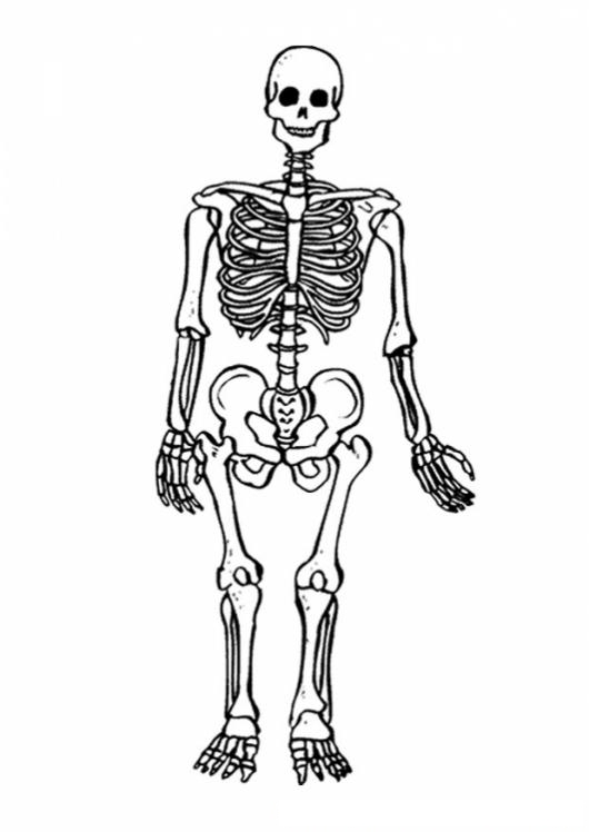 Clorear Los Huesos Del Cuerpo Humano  COLOREAR DIBUJOS DE CHOLO