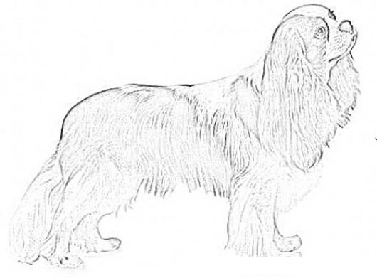 Dog Coloring Pages | Dog coloring page, Coloring pages, Dog pattern | 391x530