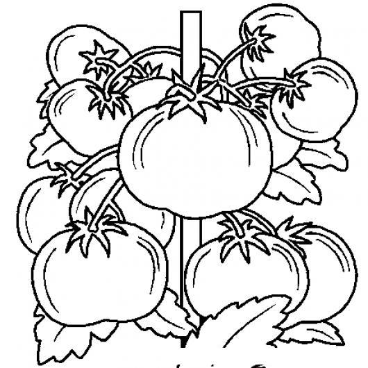 Tomates para colorear colorear dibujos de cholo tomates para colorear for Dessin de table de jardin
