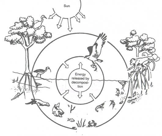 Imagenes Del Ecosistema En Dibujo Imagui