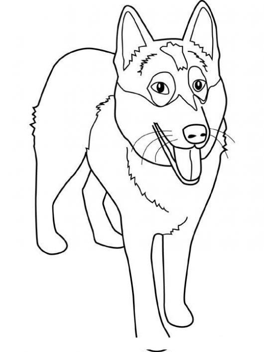Colorear Perro Lobo Colorear Perros Dibujo Para Pintar Y
