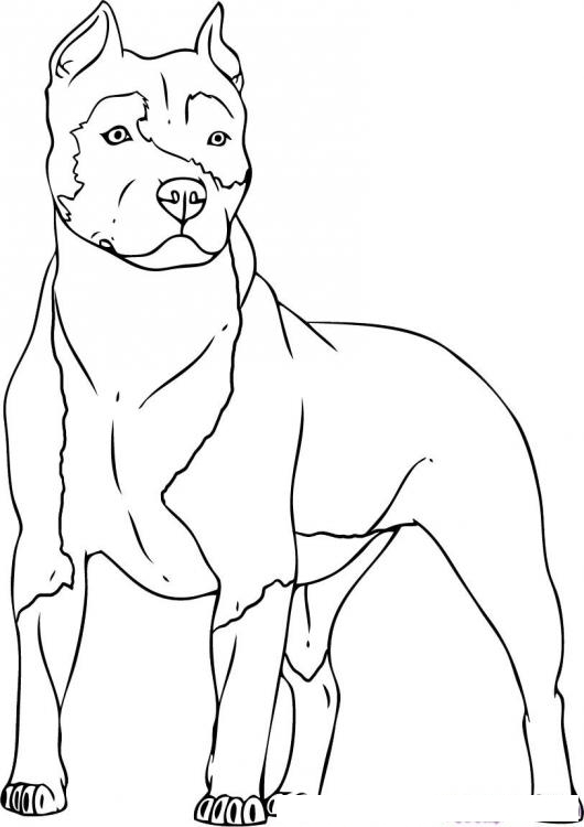 blue dog coloring pages - photo#15