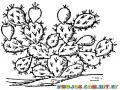 Dibujo De Cactus Para Pintar Y Colorear Cactuscactus