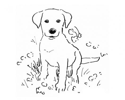 Dibujo De Perrito Cachorrito Tierno Y Cute Para Pintar Y Colorear