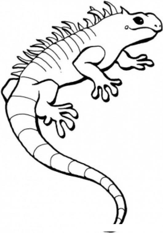 Dibujo De Iguana Verde Para Pintar Y Colorear  COLOREAR DIBUJOS